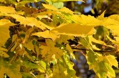 A beleza das folhas no outono fotos de stock royalty free