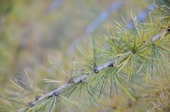 A beleza das folhas no outono imagens de stock royalty free