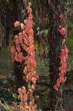A beleza das folhas no outono imagens de stock