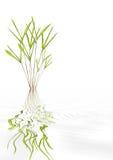 Beleza de bambu da folha Fotos de Stock Royalty Free
