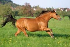 Beleza de Brown Imagens de Stock