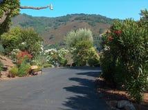 Beleza de Califórnia Imagem de Stock