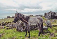 Beleza de Islândia Imagens de Stock