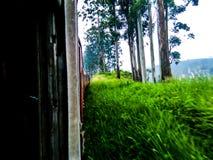 Beleza de Sri Lanka Imagem de Stock