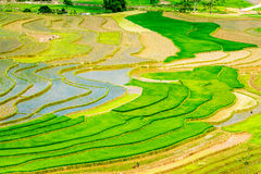 Beleza de terraços do arroz dos povos étnicos em plantar a estação imagens de stock royalty free