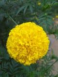 Beleza de uma flor foto de stock