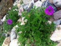 A beleza dentro das rochas Foto de Stock