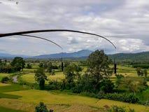 A beleza do distrito do arroz PUA Fotografia de Stock Royalty Free