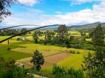 A beleza do distrito do arroz PUA Fotos de Stock Royalty Free
