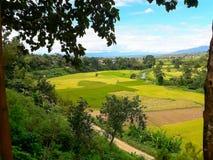 A beleza do distrito do arroz PUA Imagens de Stock Royalty Free