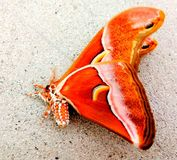 Beleza do inseto Fotografia de Stock Royalty Free