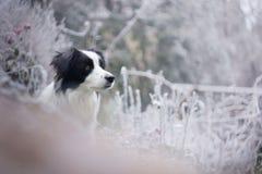 A beleza do inverno Fotos de Stock