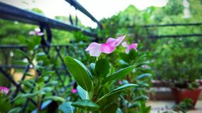 A beleza do jardim do amor Fotografia de Stock Royalty Free