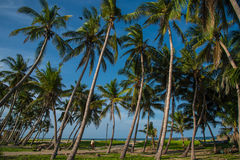 Beleza do lado de mar em Chidambaram, Índia sul Foto de Stock Royalty Free