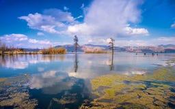 A beleza do lago Foto de Stock