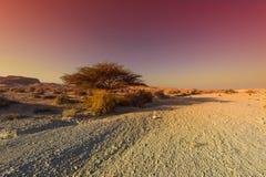 A beleza do Médio Oriente foto de stock