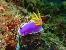 A beleza do mergulho subaquático do mundo em Bornéu, Sabah fotos de stock