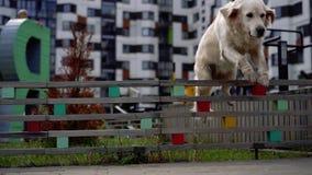 A beleza do movimento lento - um cão que salta sobre a cerca em uma cidade moderna filme