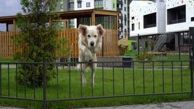 A beleza do movimento lento - um cão que salta sobre a cerca em uma cidade moderna video estoque