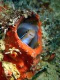 A beleza do mundo subaquático em Sabah, Bornéu fotografia de stock