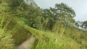 Beleza do país ascendente em Sri Lanka Fotos de Stock