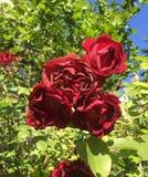 Beleza do quintal fotos de stock