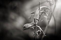 A beleza do sono dos lagartos fotos de stock