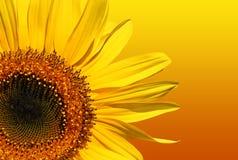 Beleza dourada imagens de stock