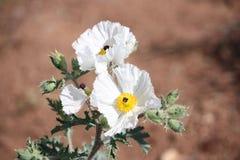 Beleza elevada do deserto Imagem de Stock Royalty Free
