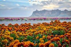 Beleza floral de Muscat, Omã Fotografia de Stock