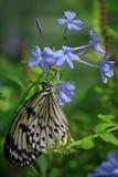 Beleza flutterby de descanso Foto de Stock Royalty Free