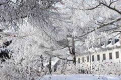 Beleza gelada do inverno imagens de stock royalty free
