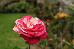 beleza junto Imagem de Stock Royalty Free