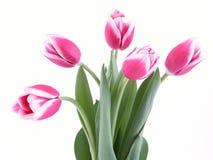Beleza na cor-de-rosa imagem de stock