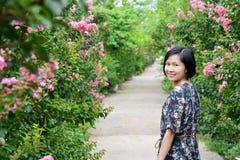 Beleza na estrada da flor da murta de crepe fotos de stock royalty free