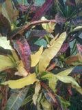 A beleza natural aumentou cor imagem de stock royalty free