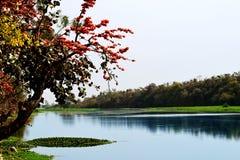 Beleza natural da água e da floresta Imagens de Stock