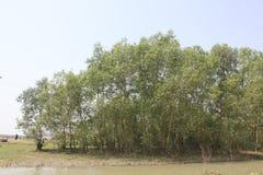 Beleza natural da ilha de Bhola fotografia de stock