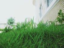 Beleza natural da terra da grama verde imagens de stock royalty free