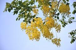 Beleza natural do racum Foto de Stock