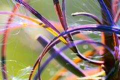 beleza natural do sumário macro do quadro da alegria e da luminosidade foto de stock