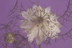 Beleza prendida no lilás imagens de stock royalty free