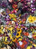Beleza pura: flores em Medellin imagens de stock royalty free