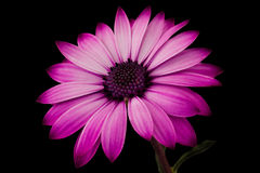 Beleza roxa Fotos de Stock Royalty Free