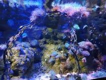 Beleza sob o mar imagens de stock royalty free
