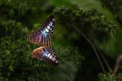 Beleza tropical bonita de assento de 3Sudeste Asiático Imagens de Stock