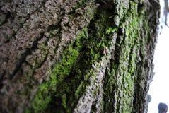 Beleza Unnoticeable das árvores imagens de stock royalty free