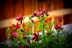 Beleza vermelha fotos de stock