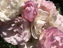 Belezas da cor pastel do verão Fotos de Stock