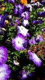 Belezas do verão Imagens de Stock